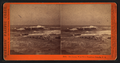 Sea Lions, West End, Farallon Islands, P.O, by Watkins, Carleton E., 1829-1916.png