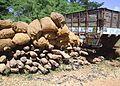 Seized Pterocarpus santalinus Red Sanders logs PIC 0002.jpg