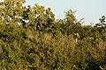 Selous Game Reserve-6.jpg