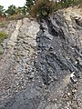 Semi-anthracite coal (Merrimac Coal, Lower Mississippian; Cloyds Mountain roadcut, Valley Coalfield, Virginia, USA) 1 (30458317246).jpg