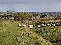 Sheep cross the Vallum - geograph.org.uk - 1023618.jpg