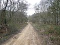 Sherwood Pines Forest Park - Footpath View - geograph.org.uk - 724326.jpg