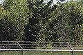 Short-billed Dowitchers, Wilson's Phalarope (bottom right), and Lesser Yellowlegs, Caledonia Sewage Ponds, May 11, 2012 (7172051428).jpg