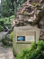 Singapore Botanic Gardens, Evolution Garden 14, Sep 06.JPG