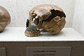 Skull of Neanderthal from Moustier, Welcome to the Neandertals, Brno, 187899.jpg