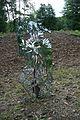 """Skulptur """"Homo Sapiens"""" des Künstler Federico Schiaffino spiegelt die Veränderung im Naturschutzgebiet Möhnetal.jpg"""