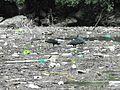 So dirty in the Sumidero Canyon... Chiapas - Mexico - panoramio.jpg