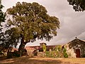 Sobreira do Pazo de Valiñas (Callobre) Árbores senlleiras de Galicia - panoramio.jpg