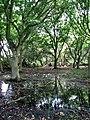 Soggy ground near Crostwight Road - geograph.org.uk - 523363.jpg
