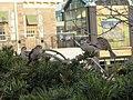 Sparrows (16057350626).jpg