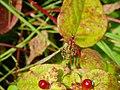 Spider 20070621 0089.jpg