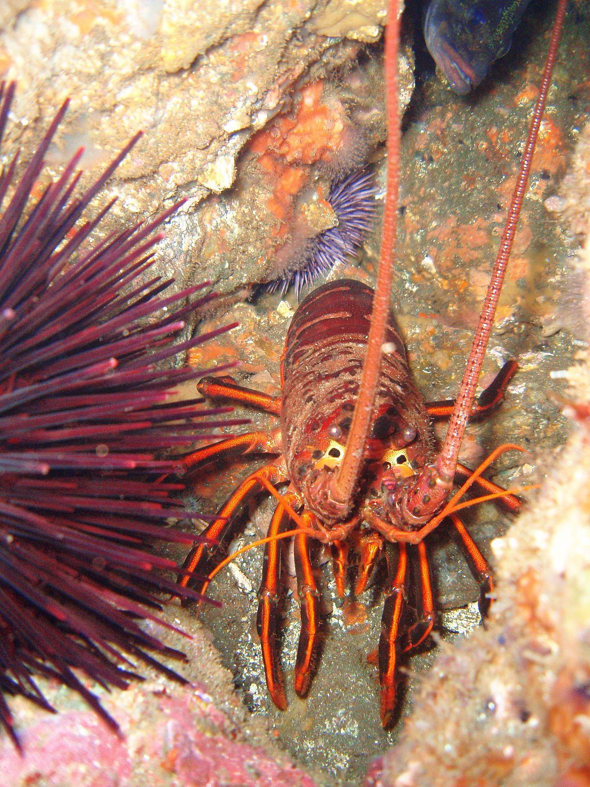 Dana Point State Marine Conservation Area - Wikipedia