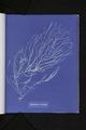 Sporochnus rhizodes (NYPL b11861683-419624).tiff