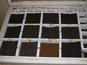 Tea leaf grading - Tray bins of dried tea leaves: O.P. (Orange Pekoe), B.O.P. (Broken Orange Pekoe), and dust graded black teas at a Sri Lankan tea factory