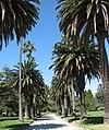 St Kilda Botanic Gardens.jpg
