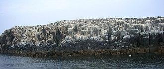 Staple Island - Staple Island