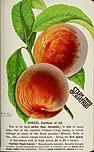 Stark fruits (1896) (20544610945).jpg