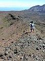 Starr-010925-0038-Pellaea ternifolia-habitat with Kim-Puu o Maui HNP-Maui (23915517183).jpg