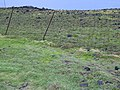 Starr-040518-0251-Cynodon dactylon-sprayed near fenceline-Puhilele HNP-Maui (24335173789).jpg