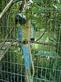 Statue of Macaw bird in a cage.jpg
