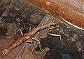 Stick Mantis (Popa spurca spurca) (11478630653).jpg