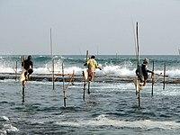 Stilts fishermen, Sri Lanka