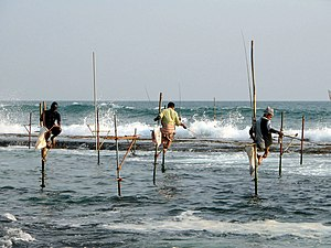 Fishing - Image: Stilts fishermen Sri Lanka 02