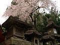 Stone lanterns near Kasuga Taisha - panoramio.jpg