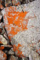 Stone run red lichen 2.JPG