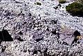 Stony Tuff on Antelope Ridge USGS ofr-98-0524.jpg