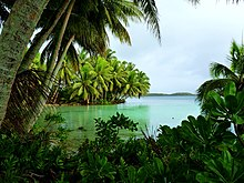 Coconut trees overlooking a small inlet