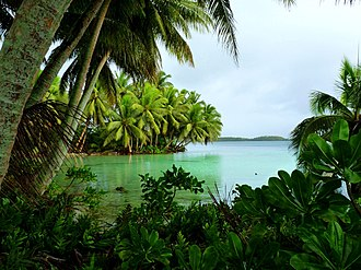 Palmyra Atoll - Coconut palms on Strawn Island at Palmyra Atoll