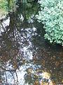 Stream at Glendalough - geograph.org.uk - 1545929.jpg