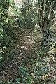 Stream below Spring Wood - geograph.org.uk - 607173.jpg