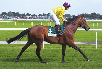 Curragh Racecourse - 2009 World Champion Sea The Stars trained on the Curragh by John Oxx
