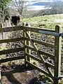 Sutton Waldron, a bull at a gate - geograph.org.uk - 1152989.jpg