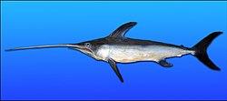 Swordfish-0046.jpg