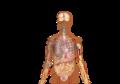 Symptoms of coronavirus disease 2019 2.0-uz.png