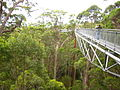 TREE TOP WALK WA.JPG