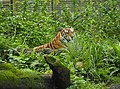 Taipei Zoo (23700962983).jpg