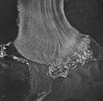 Taku Glacier, terminus of tidewater glacier and braided streams, August 24, 1963 (GLACIERS 6128).jpg