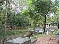 Taman Kantor Pemkot Cimahi - panoramio.jpg