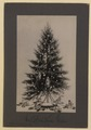 The Christmas tree (HS85-10-32282) original.tif