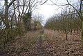 The Greensand Way west of Barn Hill - geograph.org.uk - 1158323.jpg