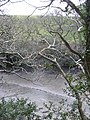 The Helford River - geograph.org.uk - 739984.jpg