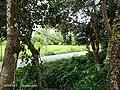 The Nature Of Tumpat district in Kelantan 1.jpg