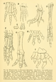 The Osteology of the Reptiles-209 dfg frty.png