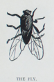 The Tribune Primer - The Fly.png