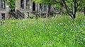 The Wildflower Meadow, Gibson Street, Glasgow University, Scotland.jpg