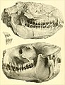 The ancient fauna of Nebraska- a description of remains of extinct mammalia and chelonia, from the Mauvaises Terres of Nebraska (1853) (14781623365).jpg